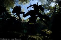 BD-101206-Cenotes-2700-Homo-sapiens.-Linnaeus.-1758-[Diver].jpg